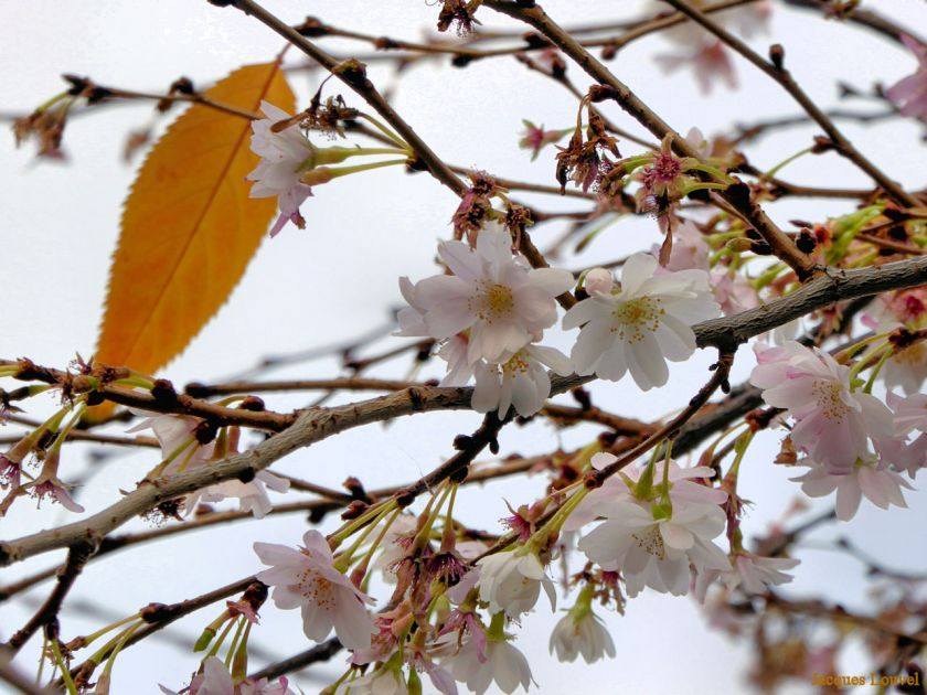 Floraison en décembre