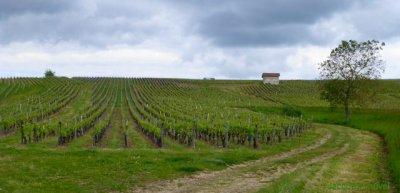Les côtes du Jura en mai