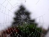 Les décorations de Noël des araignées