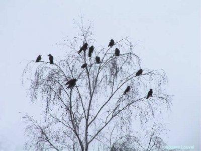 L'arbre aux corneilles