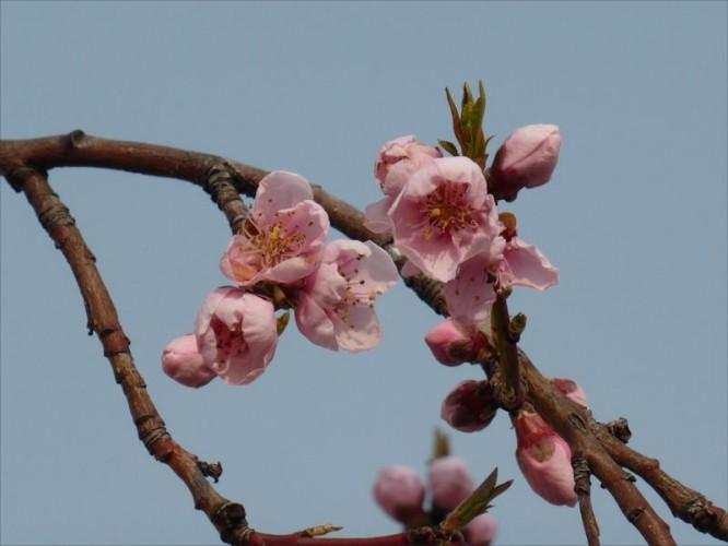 Rose sur fond bleu - printemps 2013