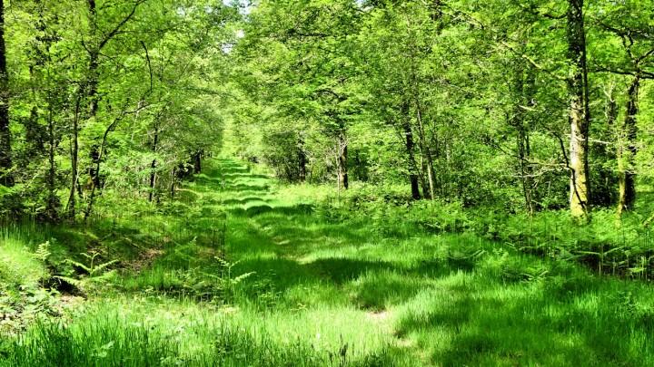 Forêt de Pail - Ambiances