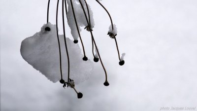 Le temps est à la neige