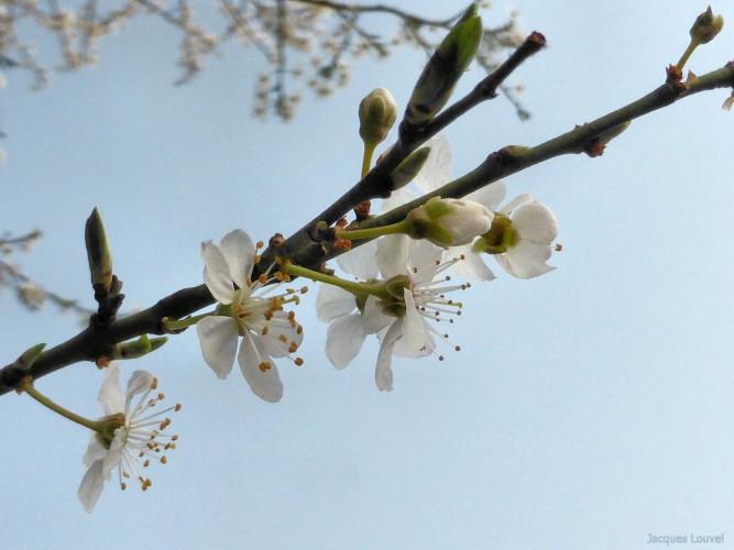 Le printemps 2015 arrive