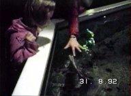Raies et Requins à l'aquarium de Loch Lomond