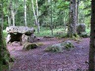Thorigny-sur-Oreuse : balade en forêt